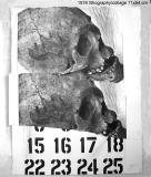 1976-24-litho_web